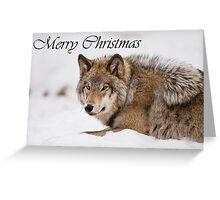 Timber Wolf Christmas Card English 11 Greeting Card