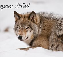 Timber Wolf Christmas Card French 11 by WolvesOnly
