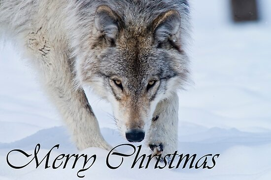 Timber Wolf Christmas Card English 12 by WolvesOnly