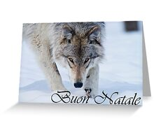 Timber Wolf Christmas Card Italian 12 Greeting Card