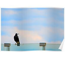 Magpie Sitting Poster