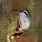 Pretty Hummer by Barbara Manis