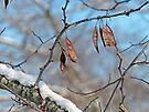 Snowy Branch by FrankieCat