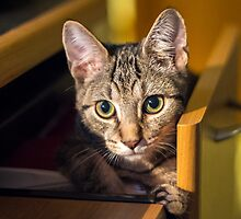 Cat in a Drawer by Mikell Herrick