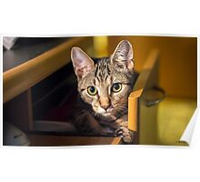 Cat in a Drawer Poster