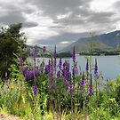 Queenstown Through Lupin and Lythrum by Larry Lingard-Davis
