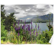 Queenstown Through Lupin and Lythrum Poster