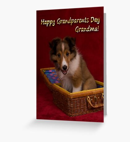 Grandparents Day Grandma Sheltie Greeting Card