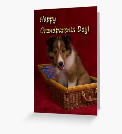 Grandparents Day Sheltie Greeting Card