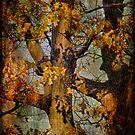 Autumn Oaks In Dance Mode by Lois  Bryan