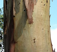Gum tree bark 5: warm smooth sheeny by Neroli Wesley