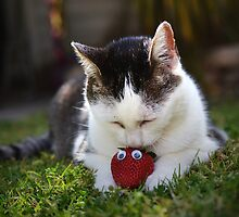 Cat+Strawberry [1] by JustAnEffigy