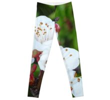 Apricot Blossom At Dawn Leggings