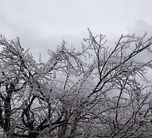 Niagara's Artistic Hand - Sparkling Frozen Tree  by Georgia Mizuleva