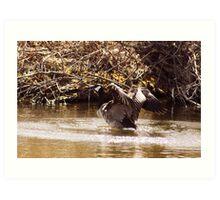 Canada Goose Landing on a Lake Art Print