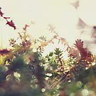 yuletide spikes by Rebecca Tun