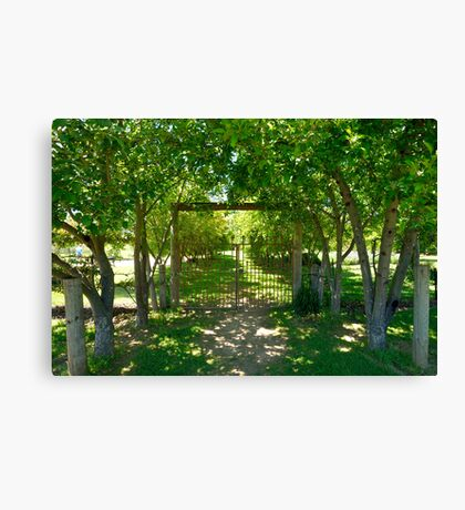 Valley Of Cool Shade Canvas Print