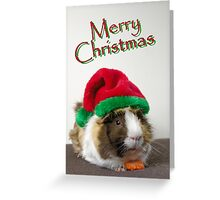 Merry Christmas Guinea Pig Greeting Card