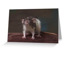 Polaris - Dumbo Rat Greeting Card