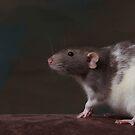 Yelle - Dumbo Rat by sogr00d