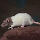 Zoey - Dumbo Rat by sogr00d