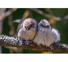 """Snuggling Siblings"" -- Bushtits Photographic Print"