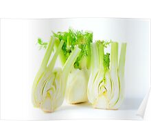 Fennel on white background Poster