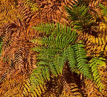 Ferns in autumn by JASPERIMAGE