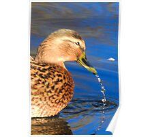 Dribbling Duck Poster