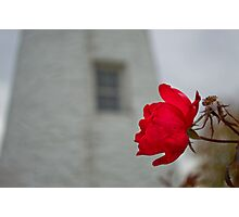 Yesterday's Love Still Grows Photographic Print