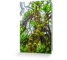 Hoh Rainforest, Olympic Peninsula, Washington State Greeting Card