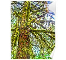 Hoh Rainforest, Olympic Peninsula, Washington State Poster