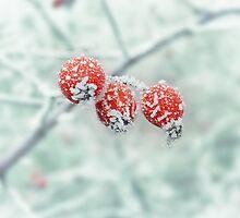 Frozen Rose Hip by Lucie Rovná