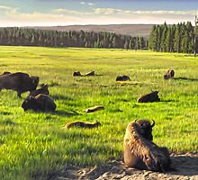 Yellowstone, Yellowstone National Park by Gregory Dyer