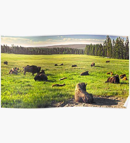 Yellowstone, Yellowstone National Park Poster