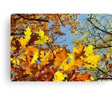 Autumn Leaves & Clear Sky Canvas Print