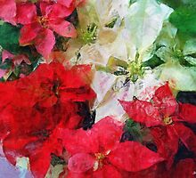 Mixed color Poinsettias 1 Sketchy by Christopher Johnson