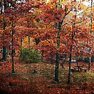 Autumn Color by Ginger  Barritt