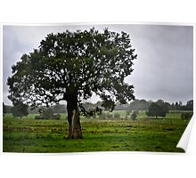Tree on countryside Poster