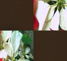 Mixed color Poinsettias 1 Blank Q3F0 Sticker