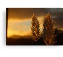 Pampas grass sunset  Canvas Print