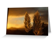 Pampas grass sunset  Greeting Card