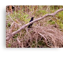 A Bird in the Brush Artistic Photograph by Shannon Sears Canvas Print