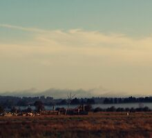 Cattle Yard by Kitsmumma