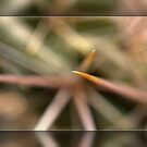 UP CLOSE WITH A CACTUS by Betsy  Seeton