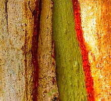Red sap oozing out of gum tree trunk onto old pealing bark. by ronsphotos
