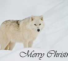 Arctic Wolf Christmas Card 1 by Michael Cummings