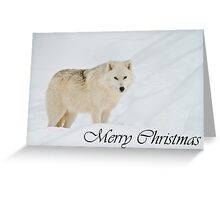 Arctic Wolf Christmas Card 1 Greeting Card