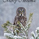Great Gray Owl Christmas Card 1 by Michael Cummings