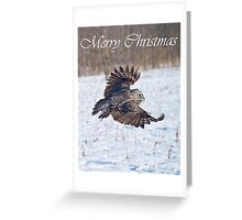 Great Gray Owl Christmas Card 4 Greeting Card